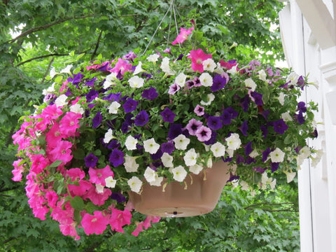"Plants, Flowers: 12"" Hanging Baskets"