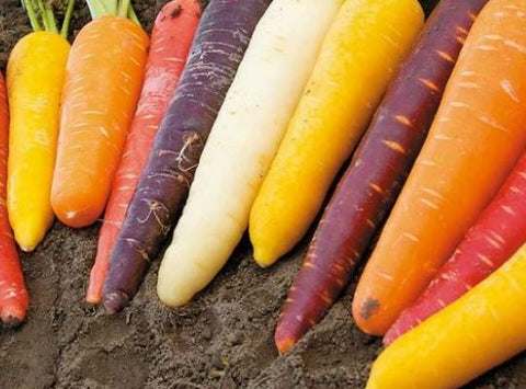 Carrots, rainbow mix NEW!  1#  bag