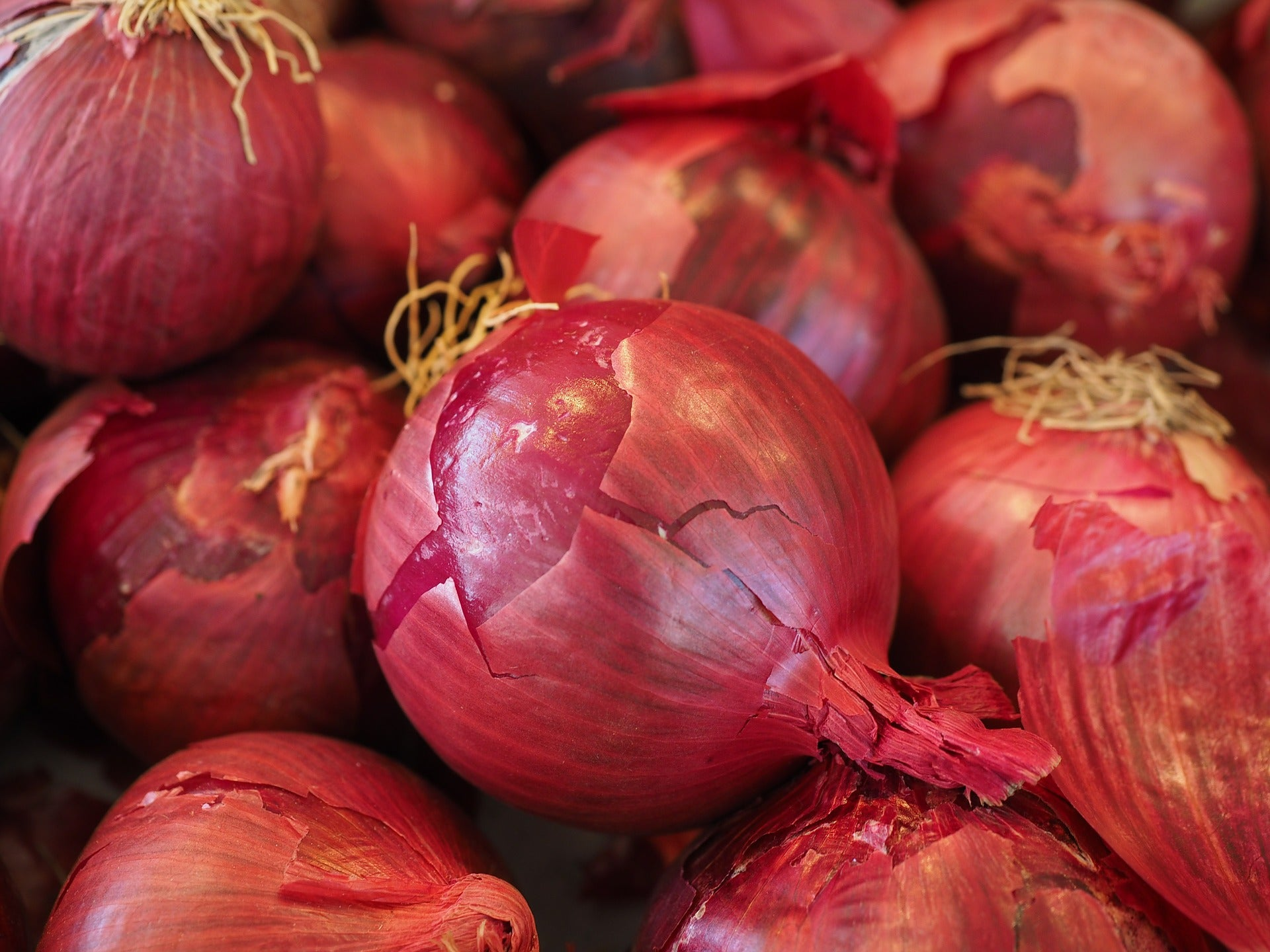 Onions, Red Certified Organic from Langwater