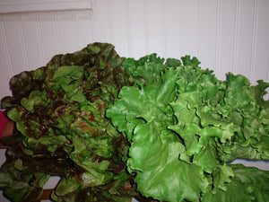 Lettuce, Head Mixes: organic, price each