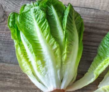 Lettuce, romaine hydroponic, price each