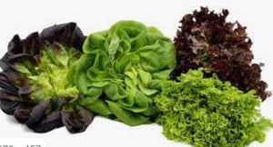 "Lettuce, Head ""Little Gem"" certified organic -price for 2"