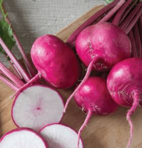 Turnips, SAVE! OVERSTOCK - scarlet queen, organic, price for 1 or 2#