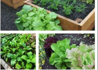 Plants: Herbs & Veggie Starts: NEW CHOICES!