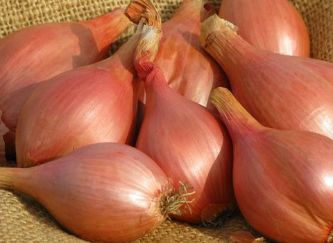 Onions, shallots, french 1/2# bag