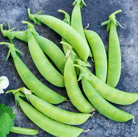Sugar Snap Peas: GREAT PRICE! 1 or 2 pound bags