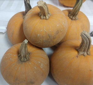 "Pumpkins, Sugar ""Winter Luxury"" - the sweetest ones!"