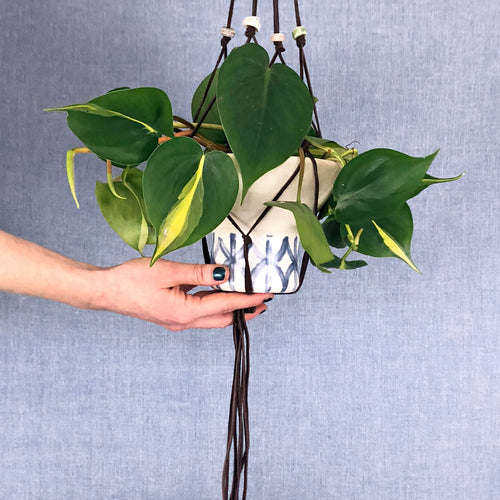 Lucille Hanging Planter