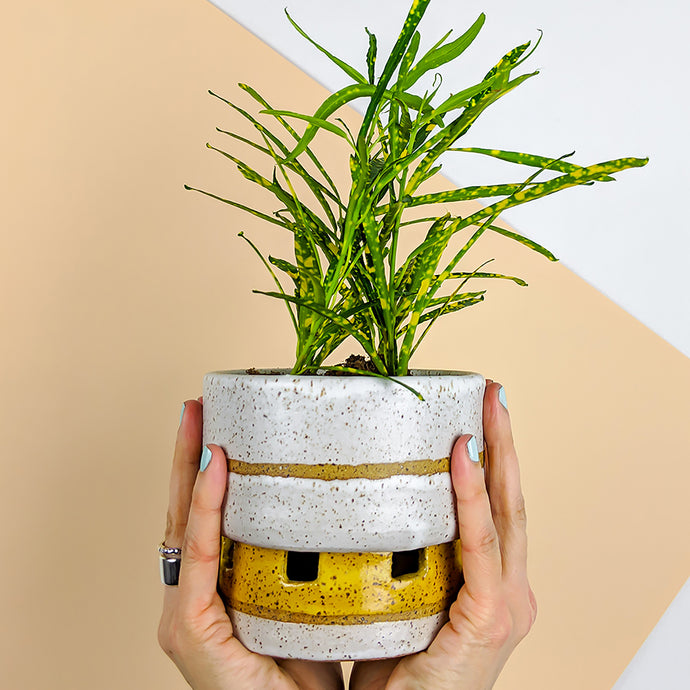 cream and yellow self watering planter