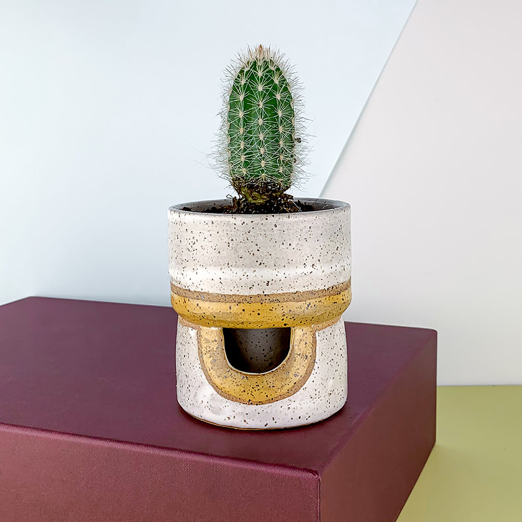 yellow and white cactus planter