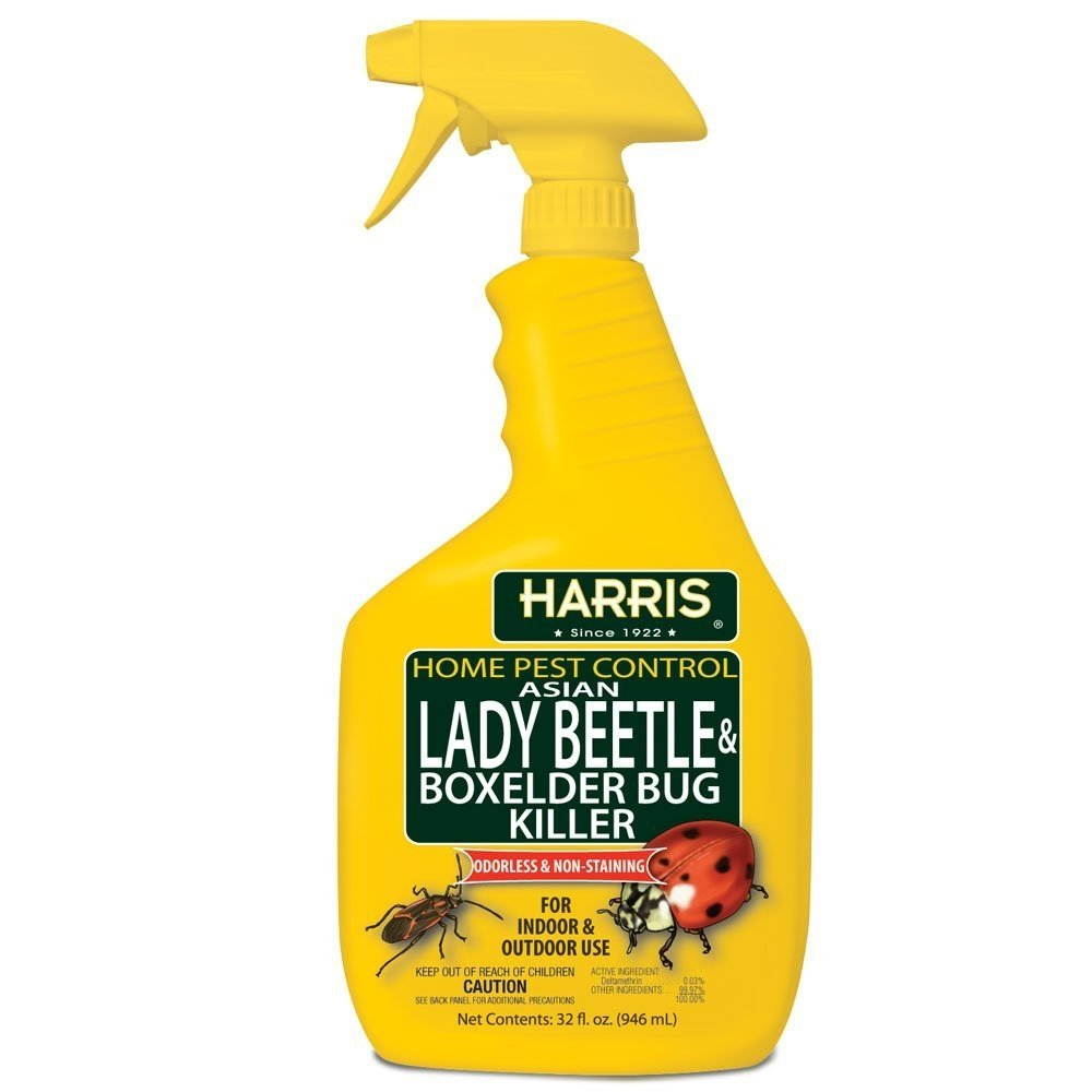 Harris Asian Lady Beetle & Box Elder Killer, Liquid Spray with Odorless and Non-Staining Extended Residual Kill Formula (32oz)