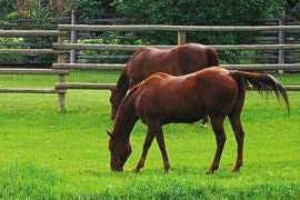 Forage - a critical part of your horses ration