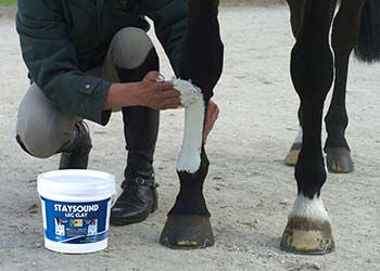 Study into the comparative efficiency of topical cooling agents in the equine limb