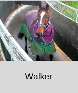 Rubber for Horse Walker