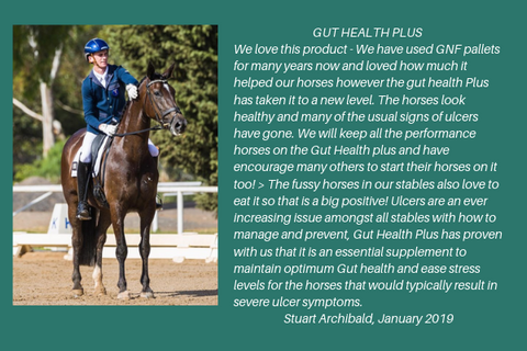 Gut Health Plus for horses