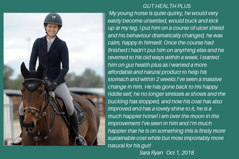 Gut Health Plus from Stable Edge