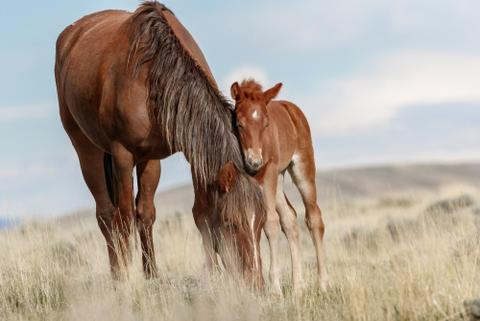 horse and foal health