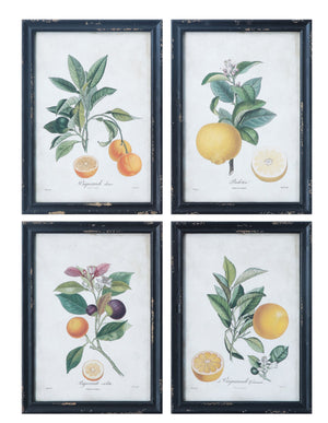 Citrus Vintage Reproduction Art (SET of 4)
