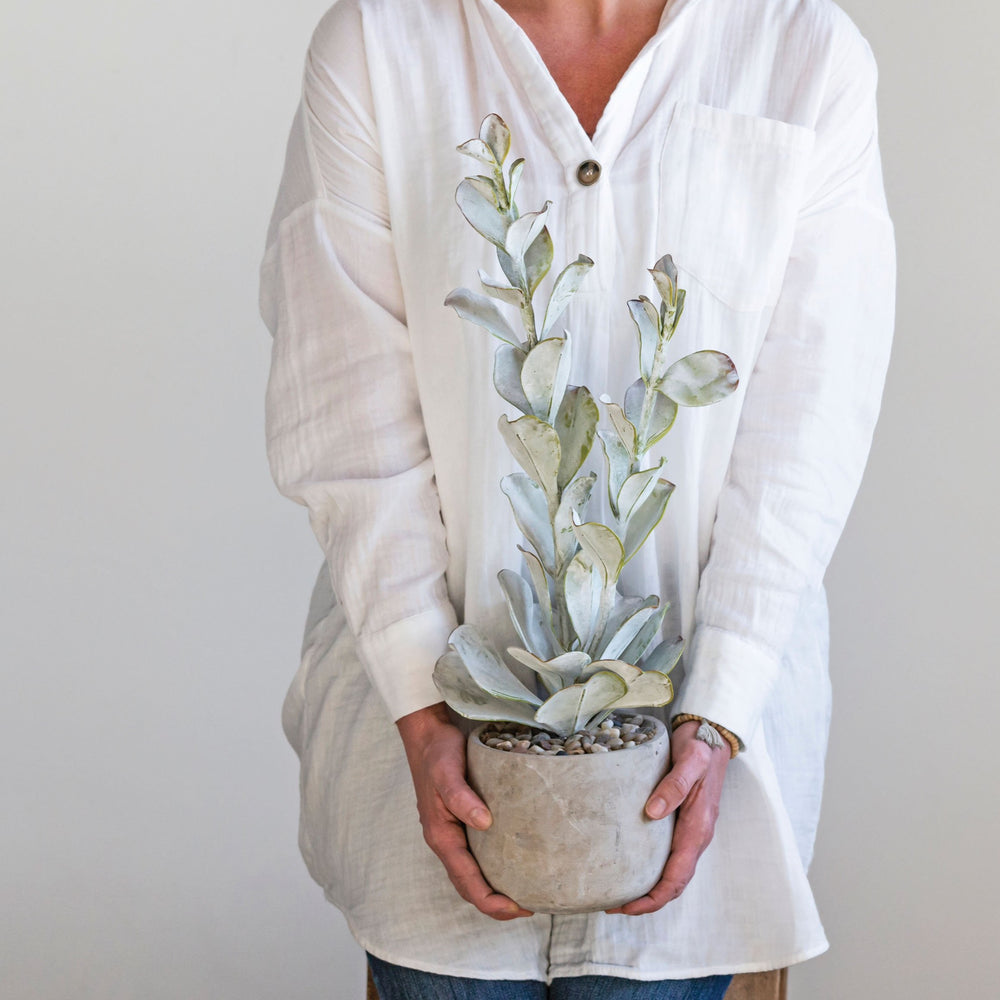 Load image into Gallery viewer, 23'' Tall Faux Succulent