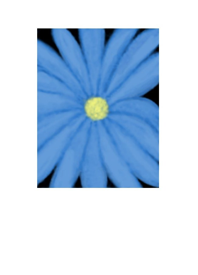 Wholesale Greeting Cards Made in NZ. Floral greeting card for all occasions by Peter Karsten