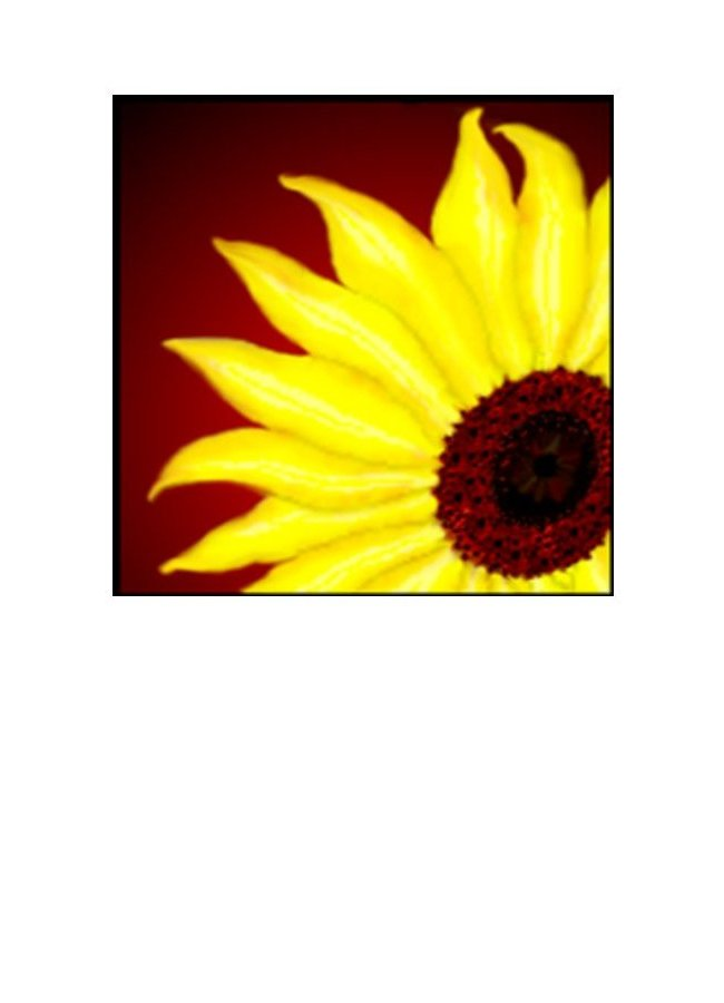Wholesale Greeting Cards. Sunflower image on greeting card / notecard suitable for all occasions - by Peter Karsten
