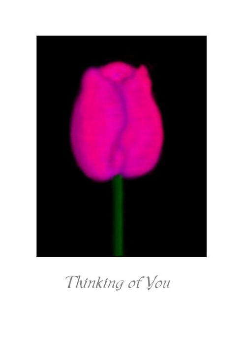 Tulip Thinking of You Greeting Card.  Blank on the inside.