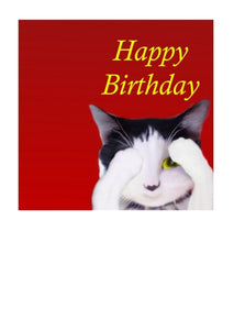 """Mr Flinn The Cat"" by Writer and artist Peter Karsten, on this cute birthday card.  Cat card.  Blank on the inside."