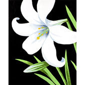 Easter Lily - Adult Paint on Canvas