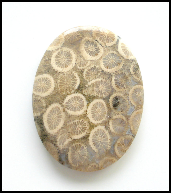Fossilized Coral Natural Stones