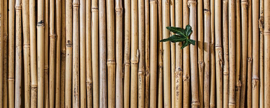 The definitive list of bamboo products you can buy