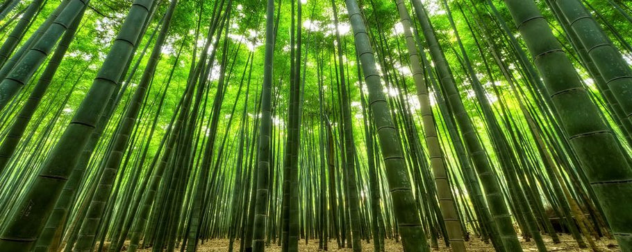 Why is bamboo sustainable?
