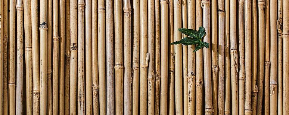 bamboo barrier