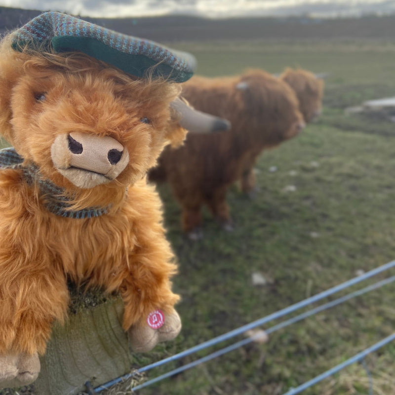 Gordon Castle Highland Cow