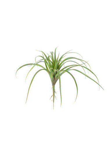 Artificial Air Plant - Set of 6