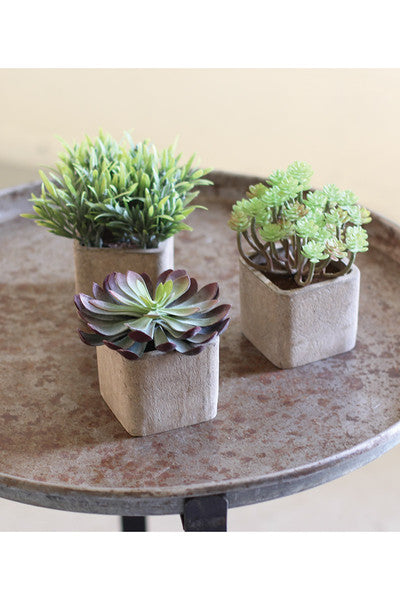 Small Artificial Succulents In Square Pots - Set of 3