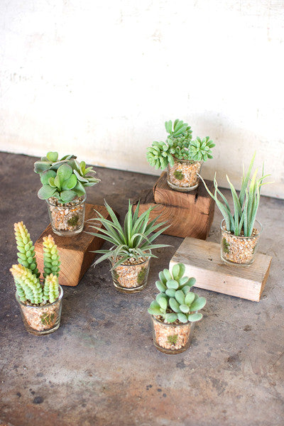 Artificial Succulents In Glass Containers - Set of 6