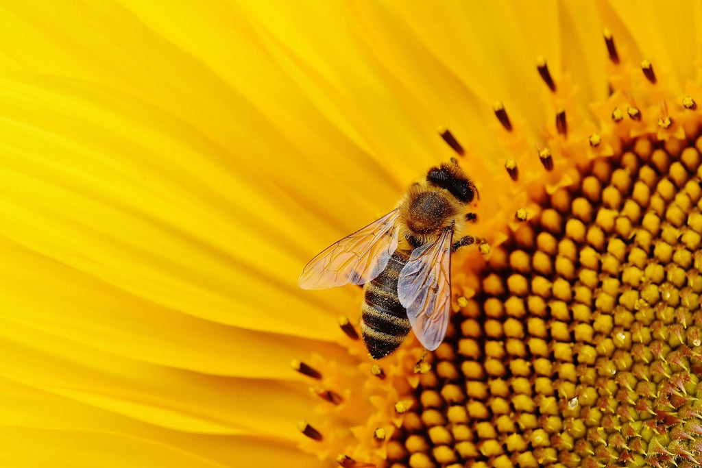 Bee-ware, our pollinators are disappearing!