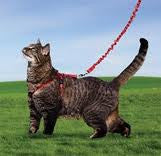 Come With Me Kitty Harness