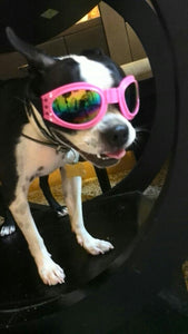 Doggie Sunglasses
