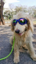 Load image into Gallery viewer, Doggie Sunglasses