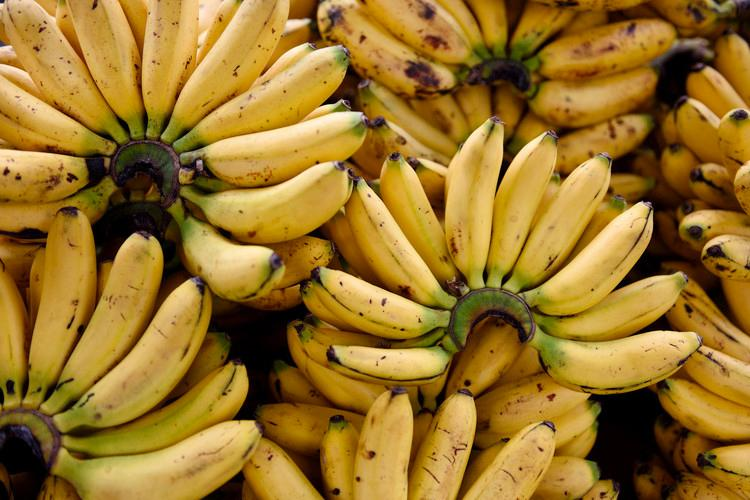 Bunches Of Organic Bananas.