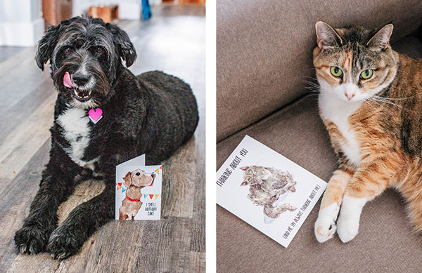 Ruby Roth cat and dog birthday greeting cards
