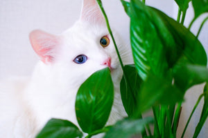 Houseplants That Are Toxic To Cats
