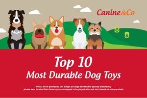 Top 10 Most Durable Dog Toys