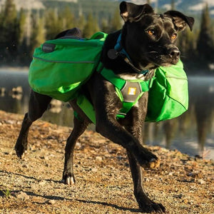 Ruffwear Approach Day Pack In Action