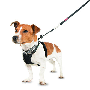 Company of Animals Halti No Pull Harness