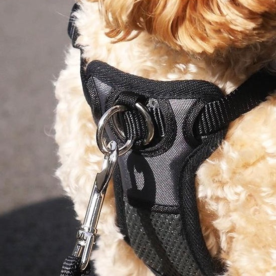 Rosewood Walk 'n' Train Front Connect Padded Harness
