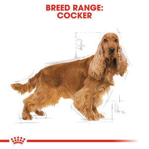 Royal Canin Cocker Spaniel Adult Infographic 1