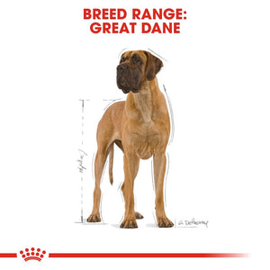 Royal Canin Great Dane Adult Infographic 1
