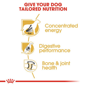 Royal Canin Great Dane Adult Infographic 3